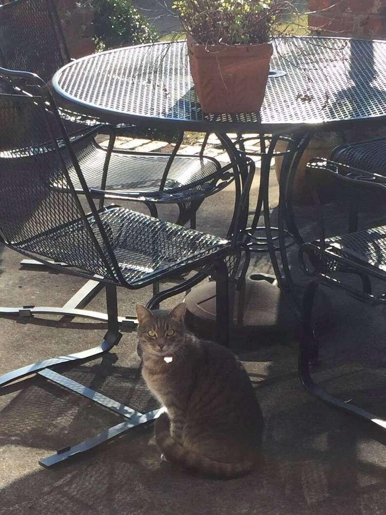 Baby Grey, a tabby cat, sneaks into her friend's yard