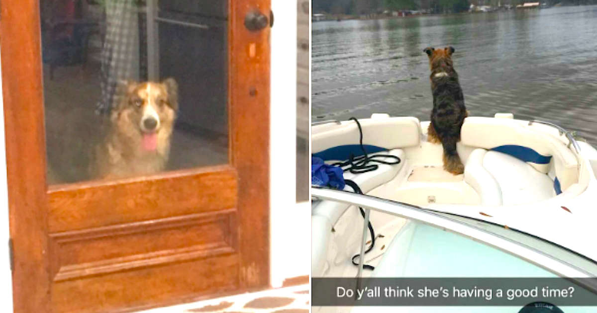 Strange Dog Shows Up At Guy's House — So He Gives Her The Best Day Ever