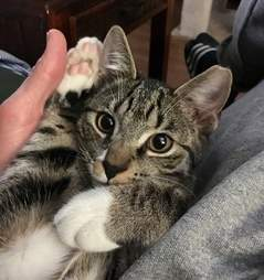 cat abandoned after family gets dogs