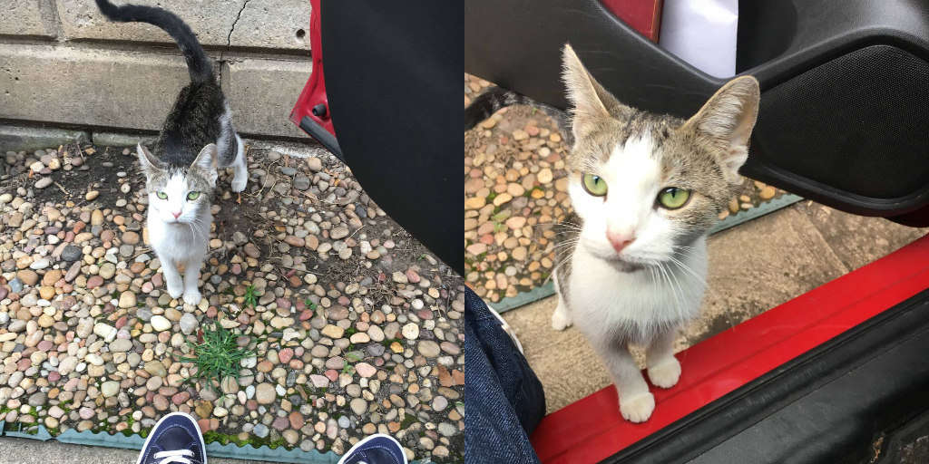 Family Kicks Pregnant Cat Out Of House Because They Got Dogs