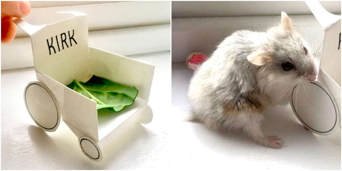 Adventurous Hamster Gets Most Special Gift After Hurting His Paw