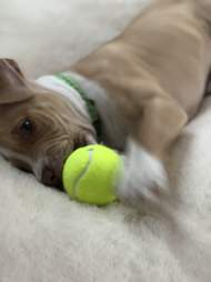 Nutty-Buddy plays with a ball