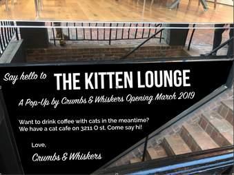 kitten lounge adopt