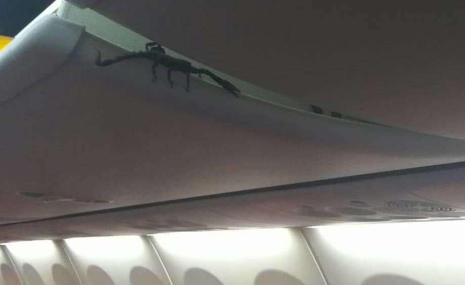 Giant Scorpion Spotted Crawling in Plane's Overhead Bin Because Nightmares Are Real