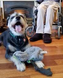 Senior dog PawPaw who needs a new home