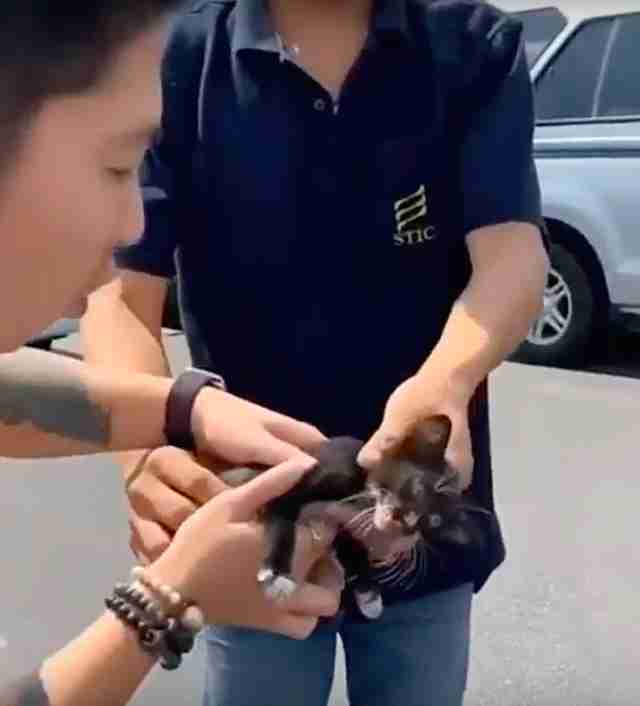 Man saves kitten from Bangkok highway