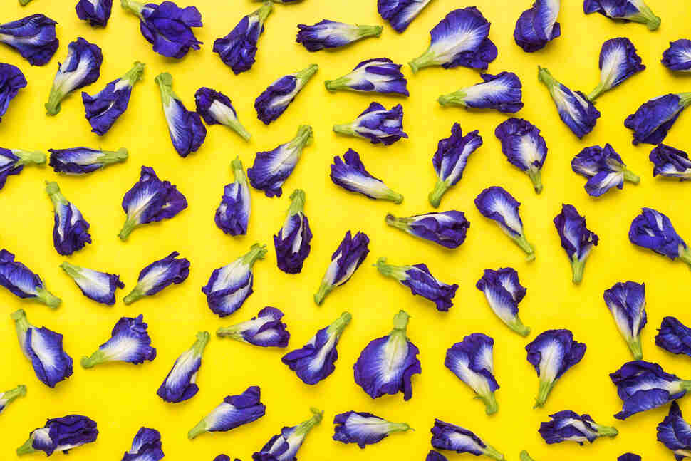 butterfly pea flowers yellow background