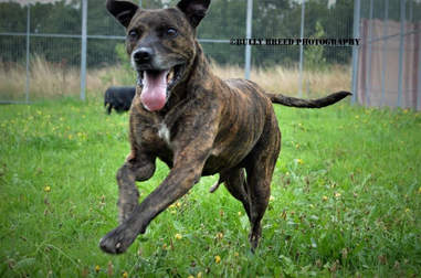 dog waiting for a home for over 466 days