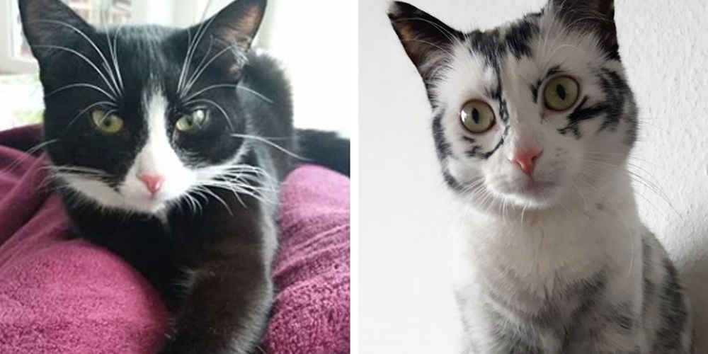 Cat With Rare Condition Changes Colors In Front Of Her Owner's Eyes