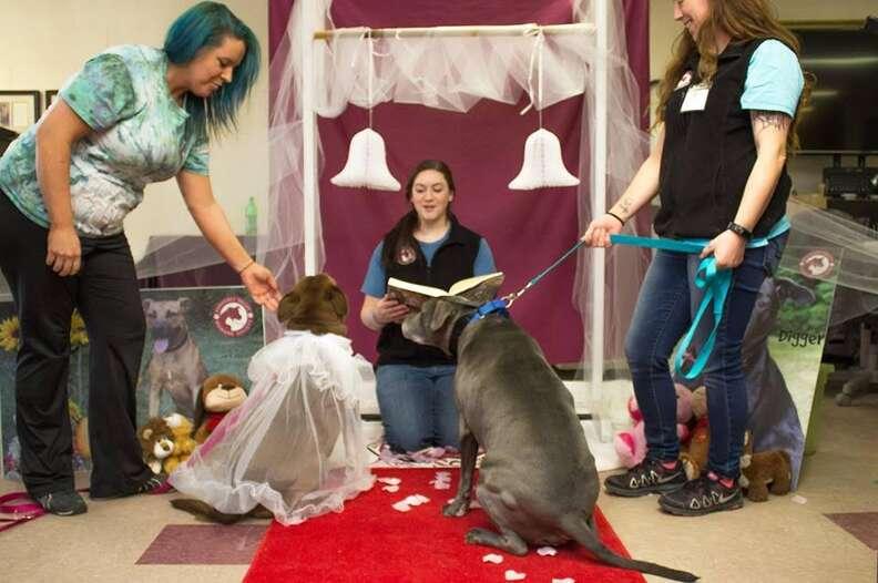 dog rescue marriage senior