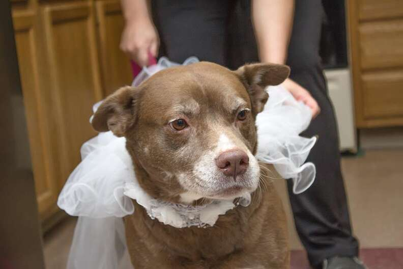 dog rescue marriage
