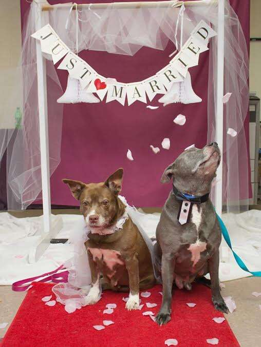 dog rescue senior wedding