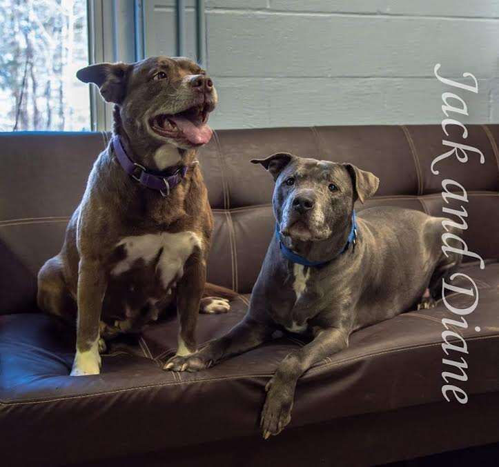 dog rescue marry maine