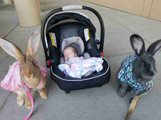 Giant Rabbit Couple Decides They're In Charge Of New Baby Sister