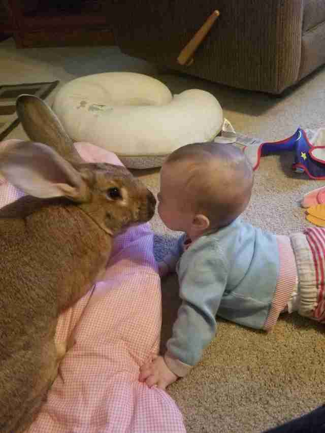 rabbit rescue therapy baby