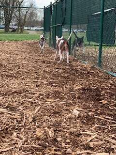dog picks out new friend