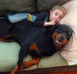 Rottweiler snuggles his little brother