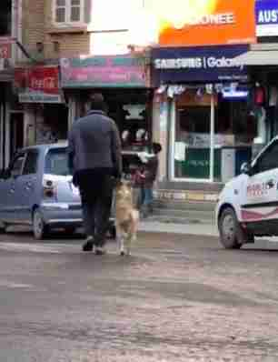 Dog holding owner's hand while crossing the street in Nepal