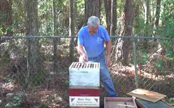 Bees rehomed at Benedictine abbey in Louisiana