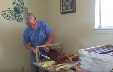 Man saving thousands of bees from under woman's bed