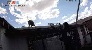 puppy on roof