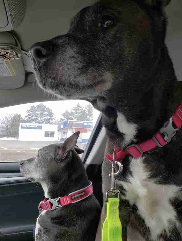 Dogs left in Petco on their way to rescue