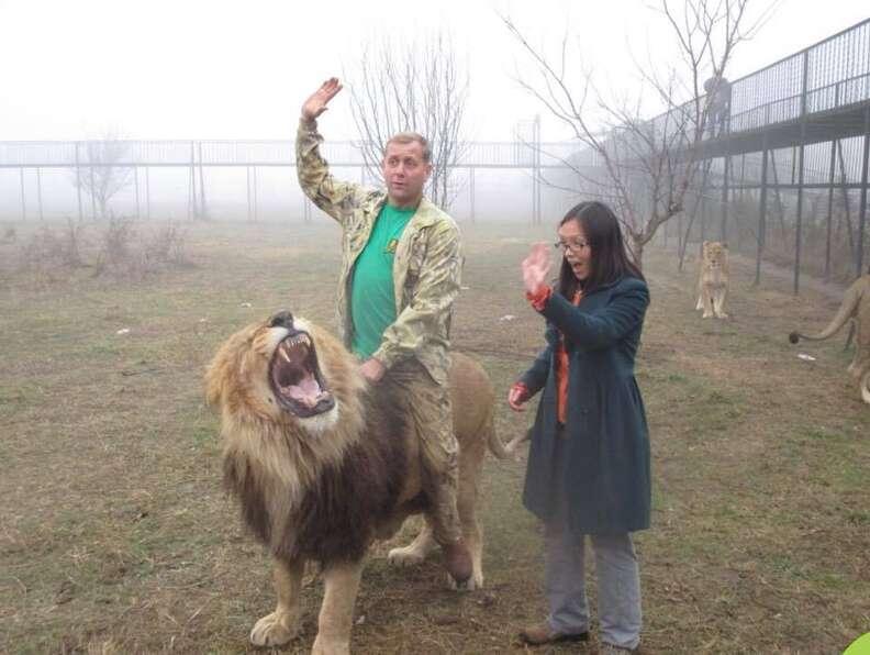 lion crimea