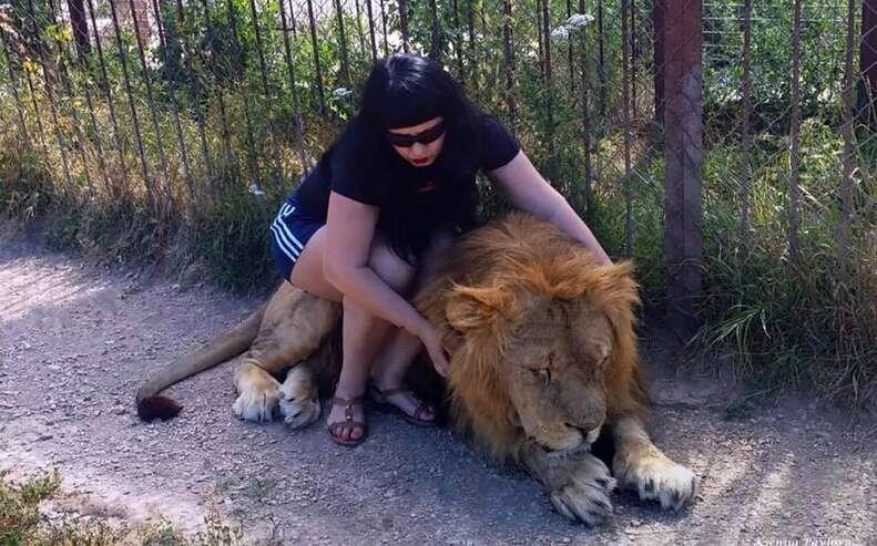 lion safari zoo crimea