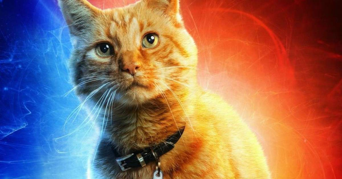 The Weird History of Goose, Captain Marvel's Adorable Cat