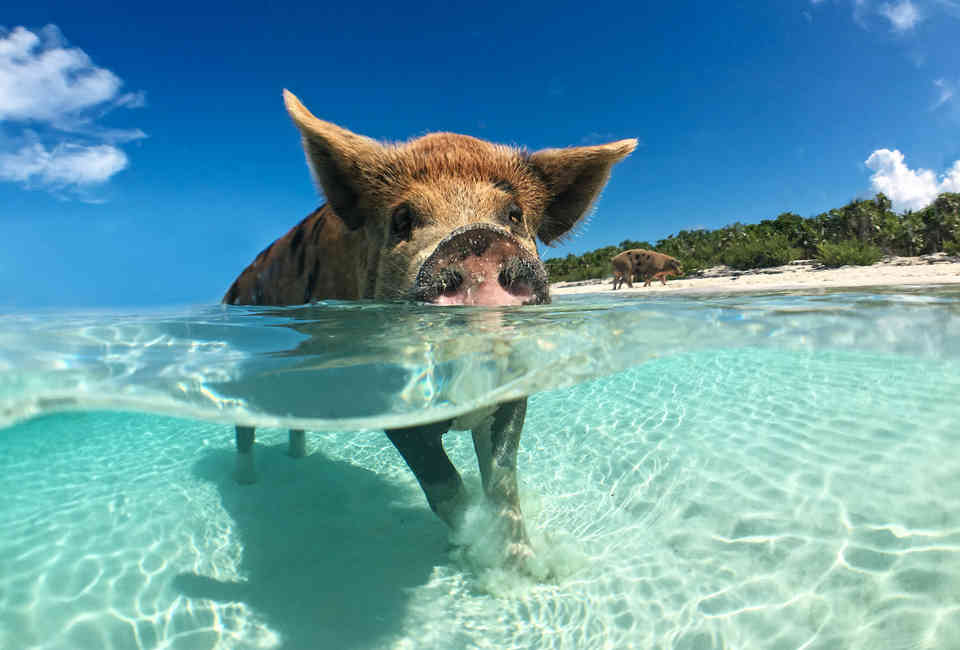 Visit Exuma: What to Know About the Stunning Islands in