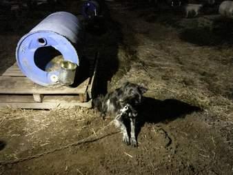 dog sled chocpaw