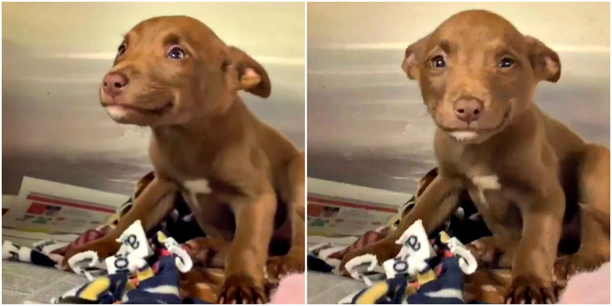 Here's The Story Behind That Adorable Smiling Puppy Clip
