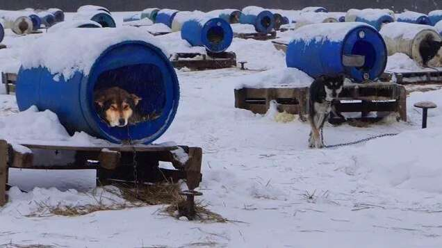 sled dog kennel chocpaw