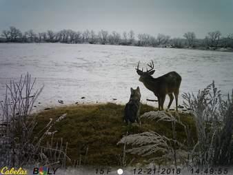 dog friendship deer