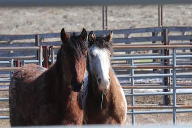 Wild horse best friends
