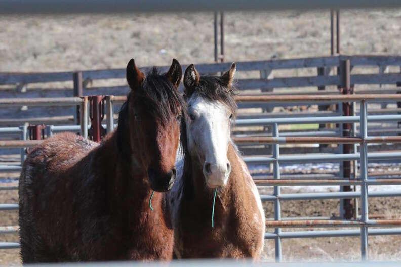 Wild horse best friends