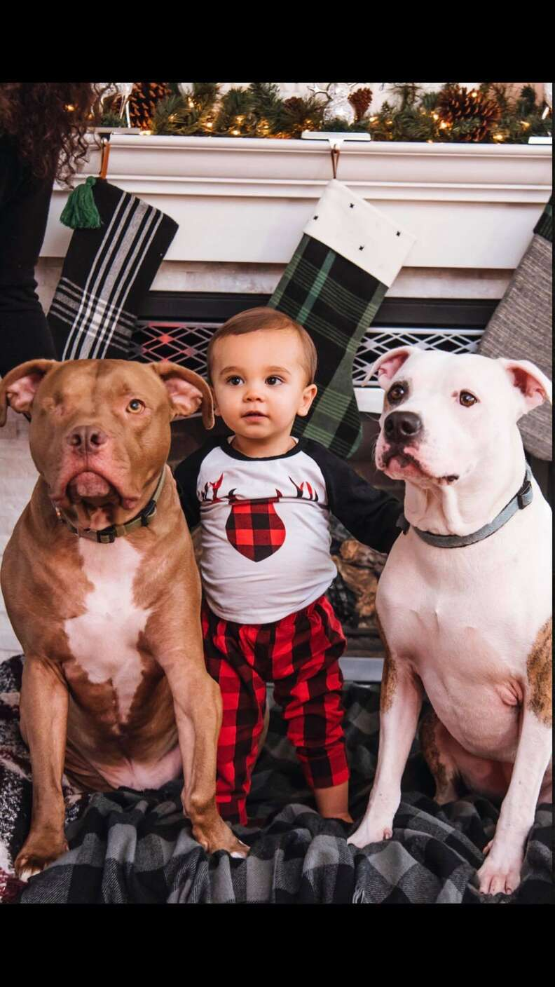 pit bull and boy