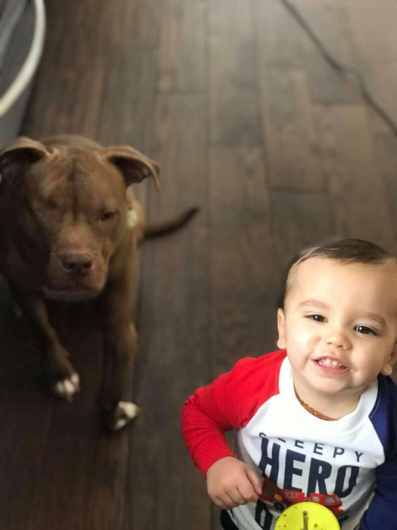 boy and pit bull