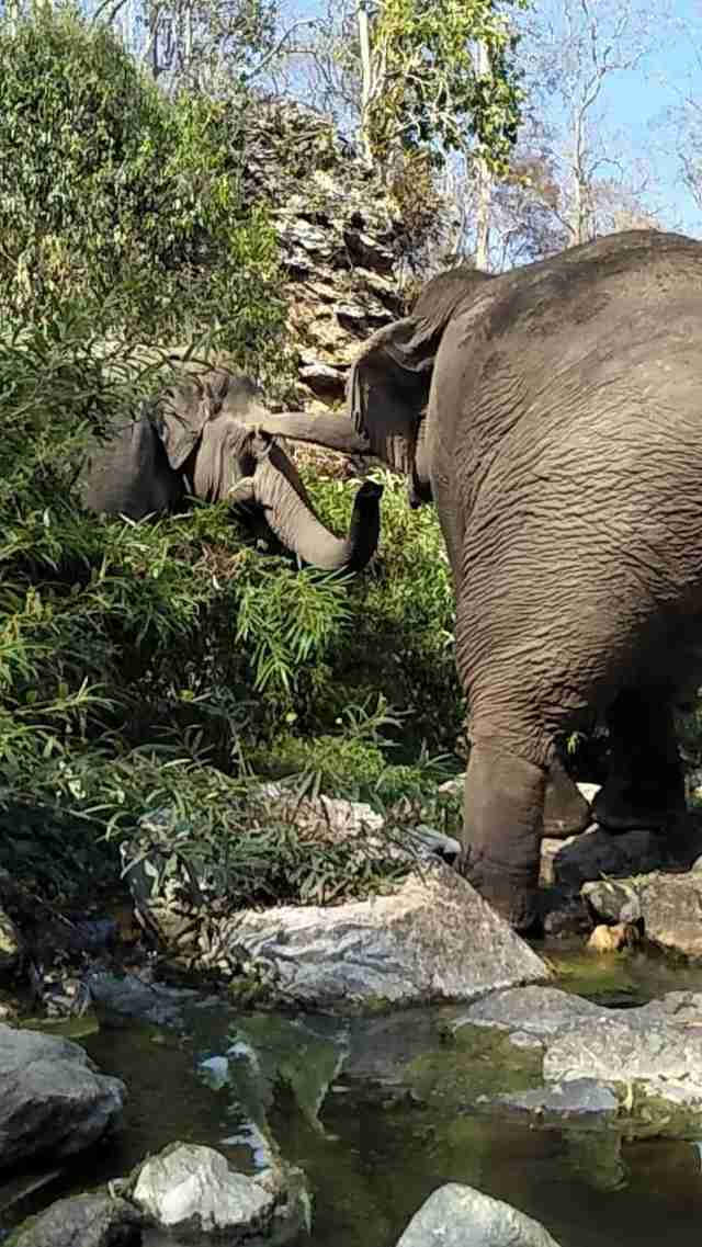 Retiring working elephant in Thailand meets first friend