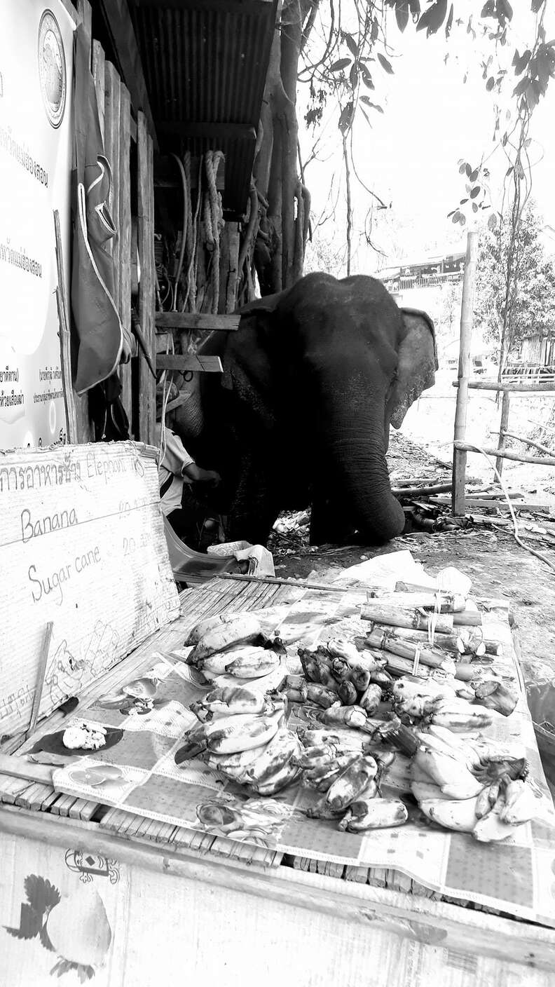 Elephant asking for food at bridge in Thailand