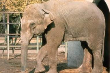 elephant lonely sad