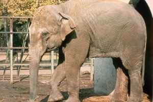 'World's Saddest Elephant' Dies Alone In Her Cell At Zoo