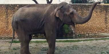 elephant sad lonely