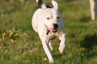 dog rescue snoop england