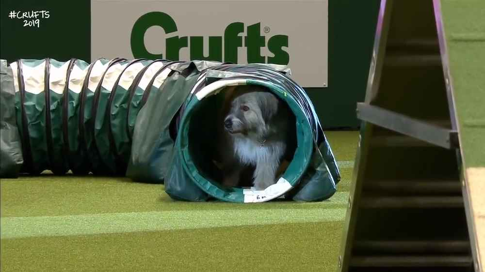 Dog Hilariously Botches Agility Course, Has the Time of His Life Doing It