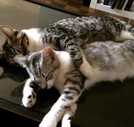 Rescue cat Zeus cuddles Zulu