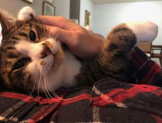 Zeus the cat cuddles his dad Parker
