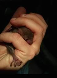 Baby bat rescued from Tel Aviv street and reunited with mom
