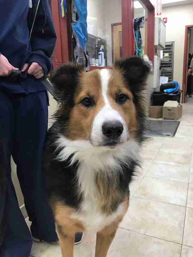 Jake the border collie looks for a new home in New York