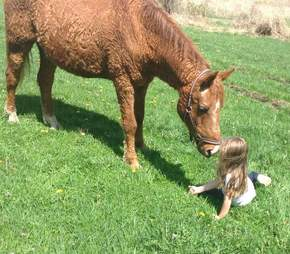 Curly horse plays with child